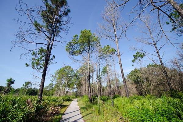 Landscape view of walking path at Gator Creek Reserve